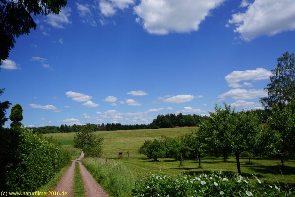 Taben-Rodt Rundwanderweg 4, Käsegewann, Wiesengelände