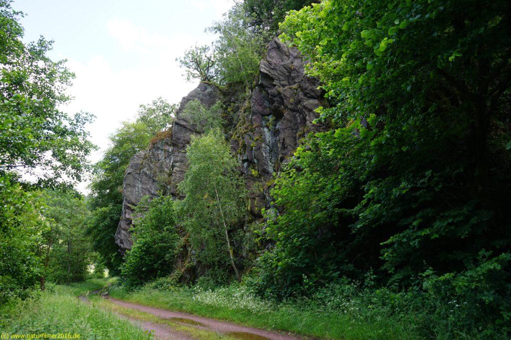 Taben-Rodt Rundwanderweg 6, Saarradweg, Felsformation, Taben-Urwald, Naturwaldreservat