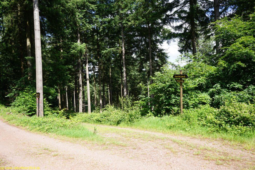 Taben-Rodt Rundwanderweg 6, Abzweigung Rundweg6 auf Kaiserweg