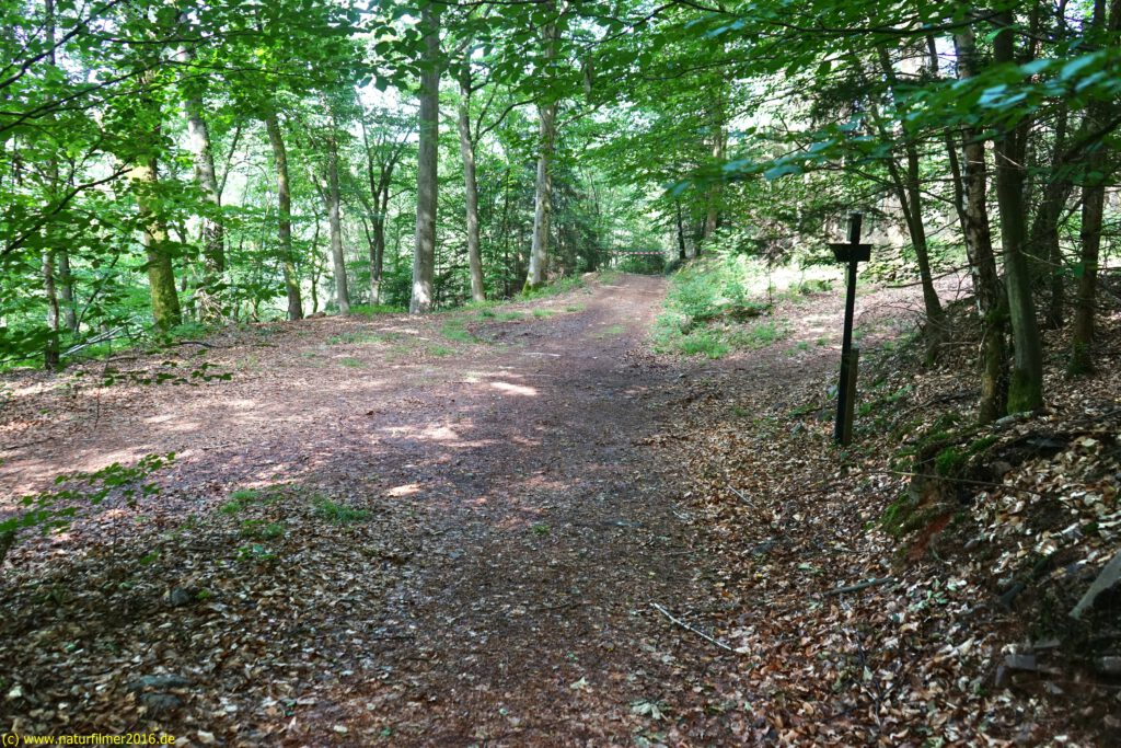 Taben-Rodt, Felsenpfad Maunert, Maunert Grat, Einmündung in Rundwanderweg3