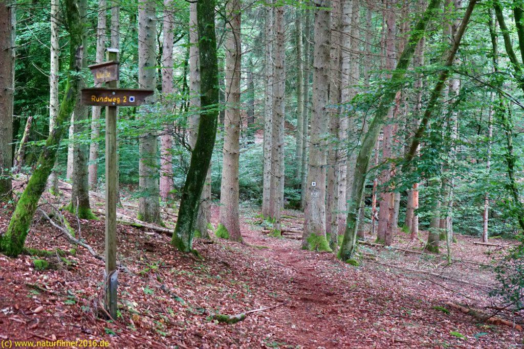 Taben-Rodt, Rundwanderweg Nr. 2, Abzweigung zur Brücke über den Breinsbach im Jungenwald