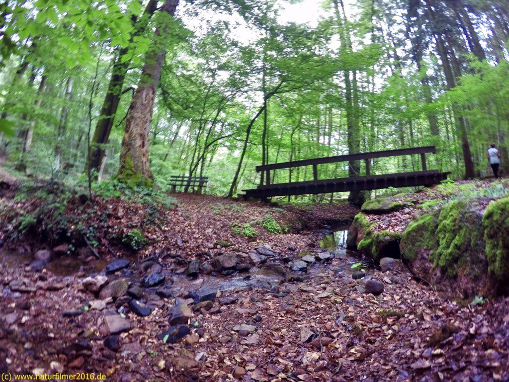 Taben-Rodt, Rundwanderweg Nr. 2, Brücke über den Breinsbach im Jungenwald