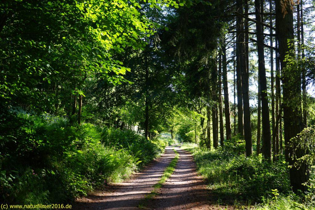Taben-Rodt, Rundwanderweg Nr. 2, Weg durch die Weitelsgewann